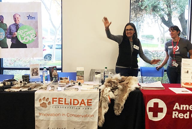 There are many volunteer opportunities available with Felidae Conservation Fund