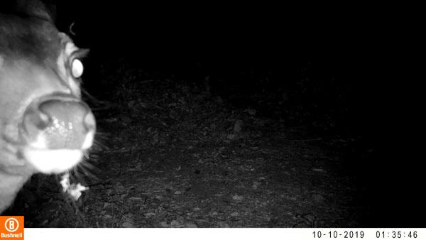 Wildlife highlights: deer nose